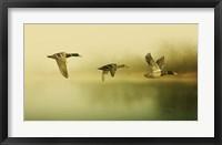 Framed Ducks Flying
