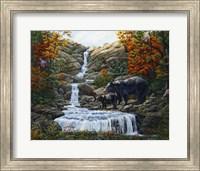 Framed Black Bear Falls