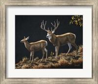 Framed Mule Deer Ridge