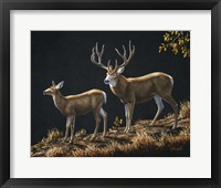 Framed Mule Deer Ridge
