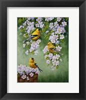 Framed Goldfinch Blossoms