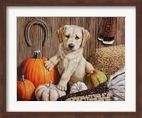 Framed Pumpkin Harvest Puppy
