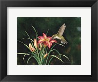 Framed Ruby's Day Lily