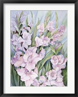 Framed Gladiolus