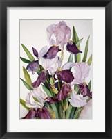 Framed Pink & Maroon Iris