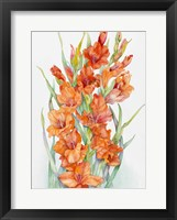 Framed Hot Orange Gladiolus