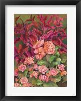 Framed Coleus and Begonias