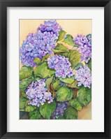 Framed Easter Hydrangea