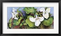 Framed Woodland Trillium A