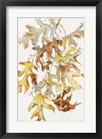 Framed Rust Colored Oak Leaves