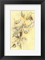Framed Milkweed