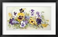 Framed Pansies In Yellow- Purple