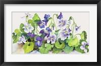 Framed Violets