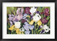 Framed Multi Colored Field Of Iris