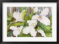 Framed Woodland Trillium