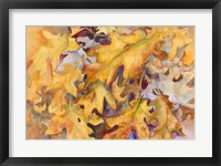 Framed Windblown Leaves