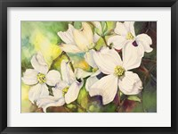 Framed White Dogwood