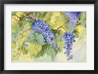 Framed Grape Vineyard