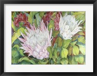 Framed Protea And Red Ginger