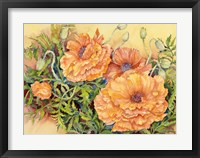 Framed Double Poppies