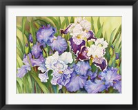 Framed Irises in Shades of Lavender