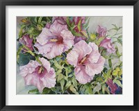Framed Pink Hibiscus