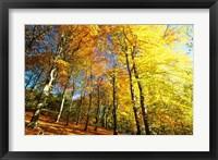 Framed Autumn Leaves of Trees