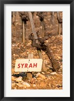 Framed Syrah Vine and Sign at La Truffe de Ventoux Truffle Farm