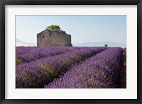 Framed Lavender fields, Provence, France