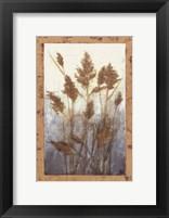Framed Plume Grasses