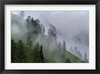 Framed Forest in Tyrol, Austria