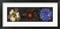 Floral Burst I Framed Print