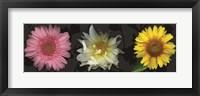Floral Burst II Framed Print