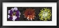Floral Burst IV Framed Print
