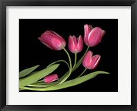 Framed Tulips 3