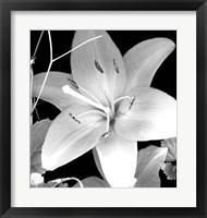 Framed White Lily II