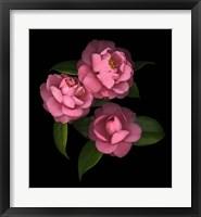 Framed Camellia 8
