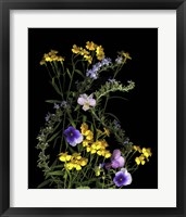 Framed Pansy, Rosemary & French Tarragon