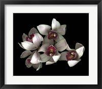 Framed Pale Pink& Fushia Orchid 2