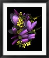 Framed Tulip Magnolia & Jasmine