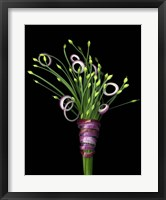 Framed Chive Blossoms & Red Onion
