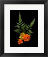 Framed Ferns & Marigolds