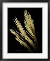 Framed Decorative Grass