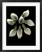 Framed Crystal Blush Calla Lily 2