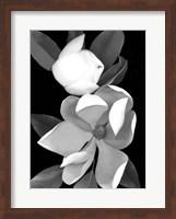 Framed White Magnolia 1