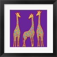Framed 3 Giraffes