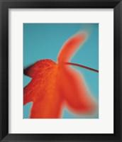 Orange Leaf II Framed Print
