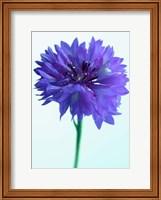 Framed Lilac Delight