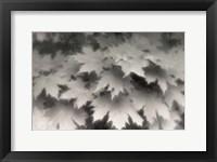 Framed Shades of Grey