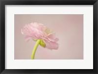 Framed Delicate Pink II